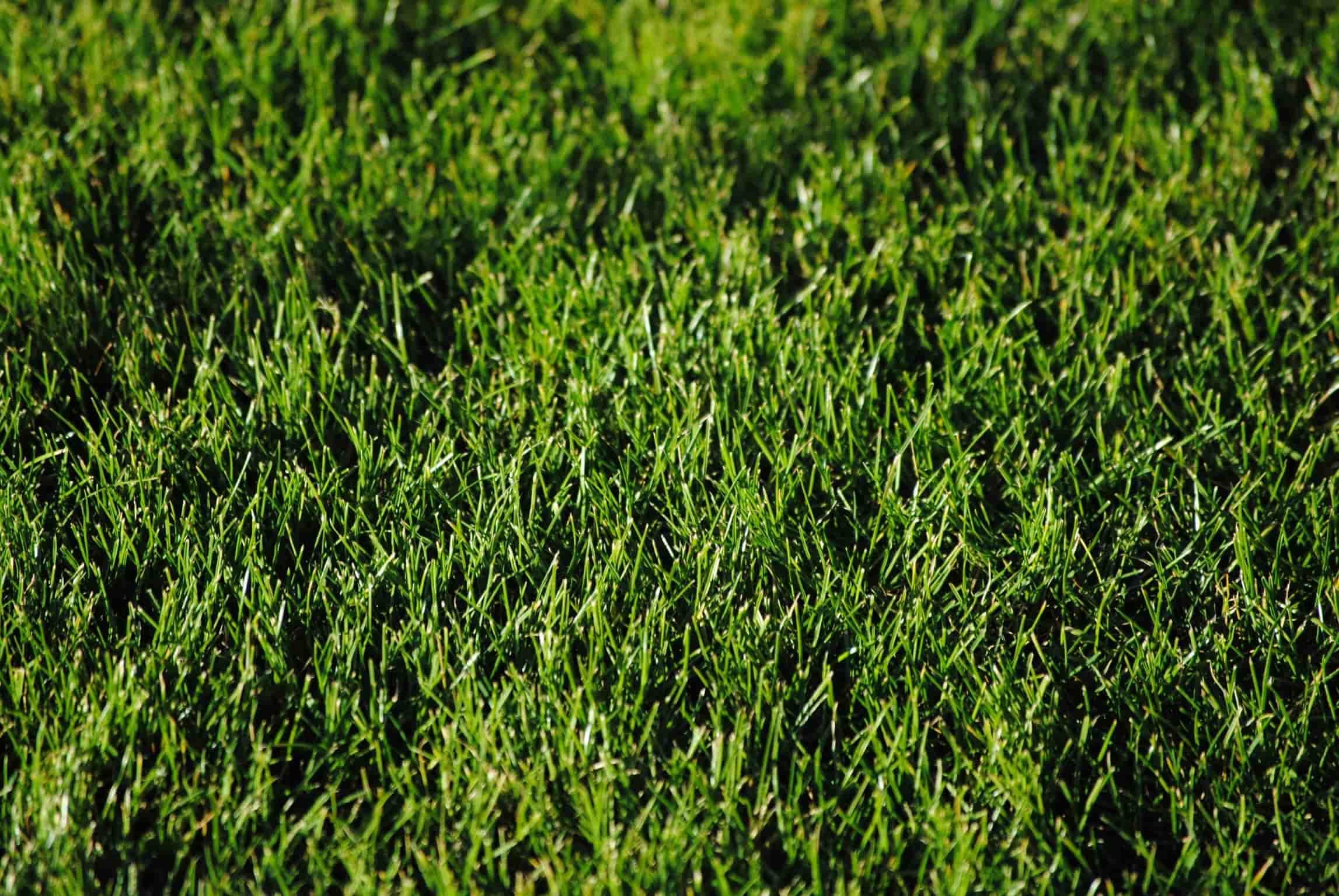 Koop een robot grasmaaier die het maaiwerk voor je doet